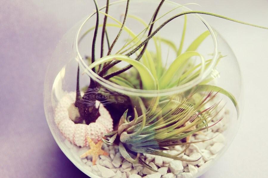 Sea Inspired Fishbowl Terrarium // Air Plants in Glass Bowl Wedding Favor Decor Gift DIY Minimalist Garden tillandsia modern centerpiece