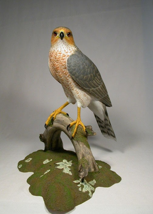 15 inches Cooper's Hawk Hand Carved wooden Sculpture