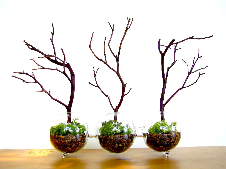 Forest Terrarium: Modern Globe Manzanita Forest  Moss Terrarium