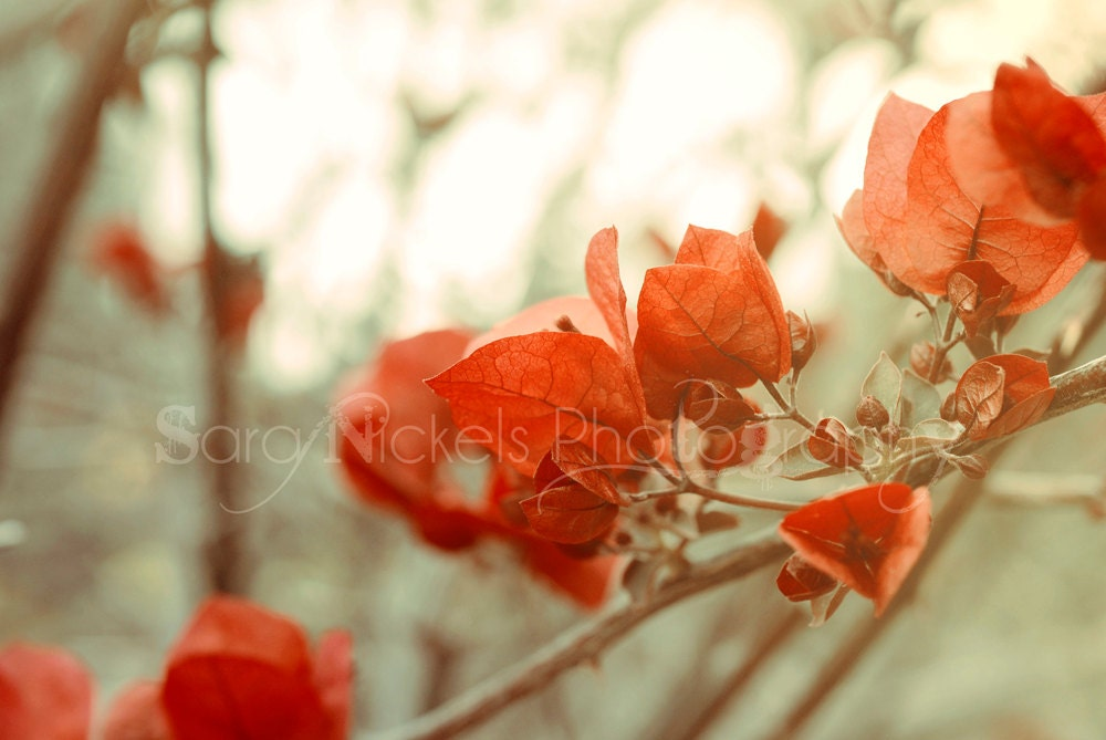 Red Leaf Flower Petals - 8x10 Photograph - California - NickelsPhotography