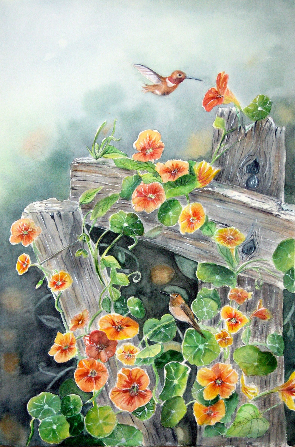 original watercolor of hummingbirds and nasturtium on old fence