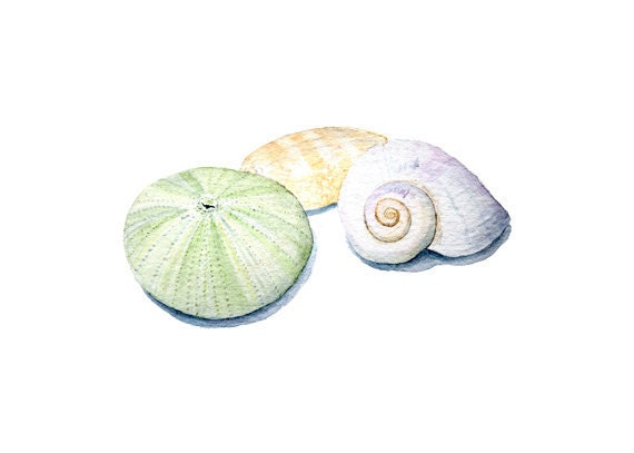 Seashells Watercolor Painting - Sea Shell Art, Sea Urchin, Beach, Ocean, Nautical, Mint Green, Nature Study, Pastel - Art Print - trowelandpaintbrush