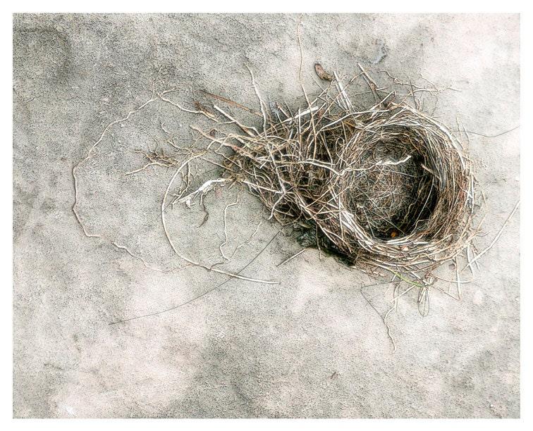 Nature Photography, neutral home decor, stone, nest, Bird's Eye View, fine art print 8x10 - moonlightphotography