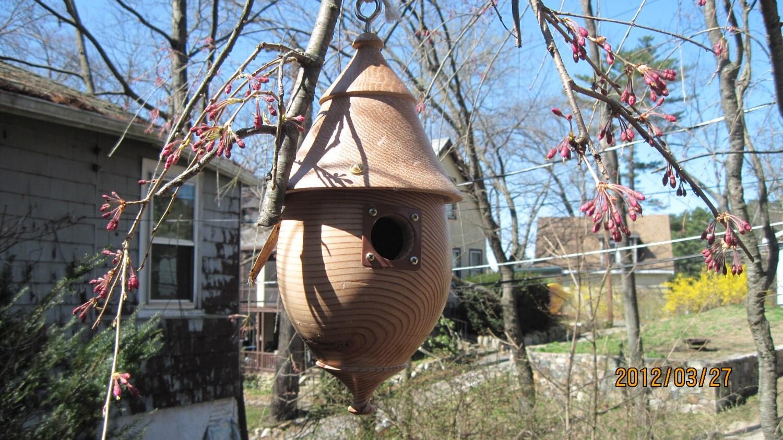 Acorn bluebird birdhouse - tomlibby