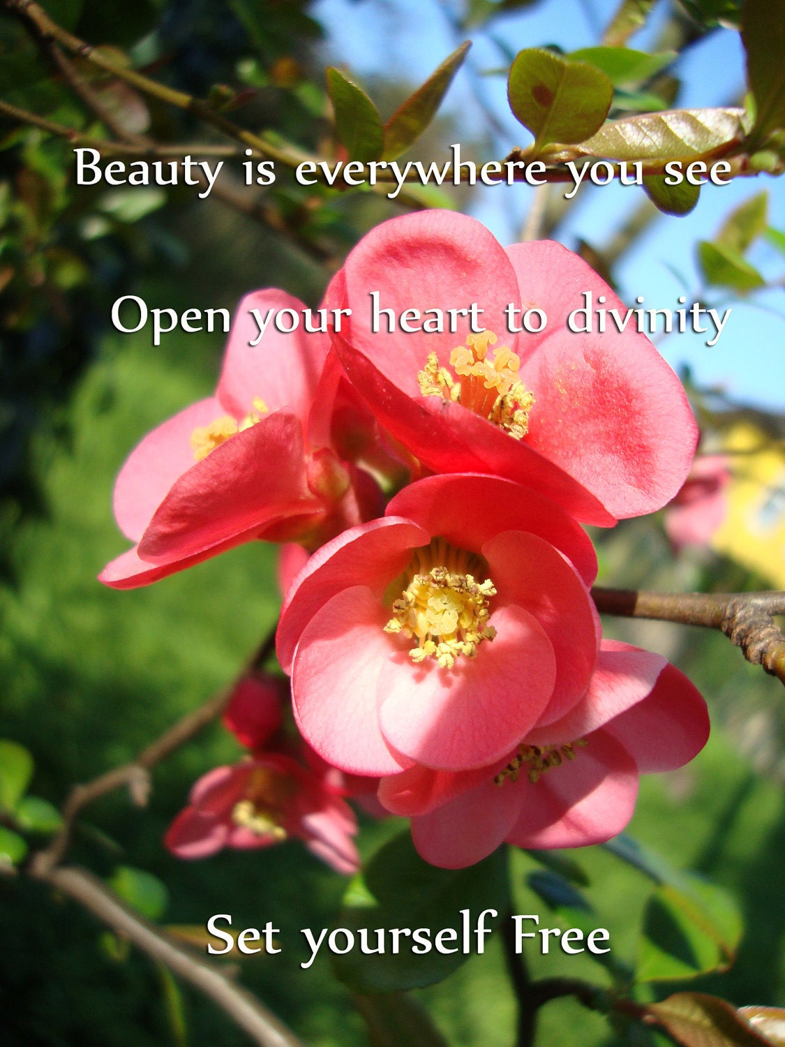 Nature Photo Inspirational Quote -  8x10 Fine Art Photography, Beauty is everywhere you see