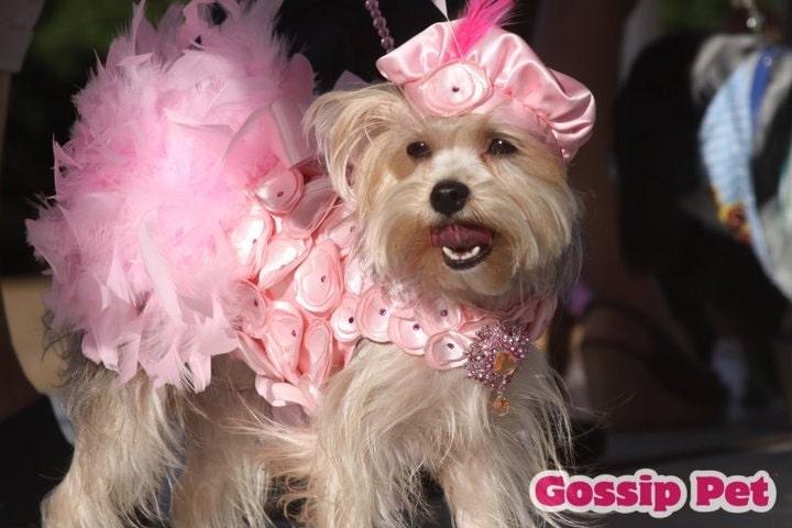 Crazy In Love - Pink Розетка перо Harness собак платье