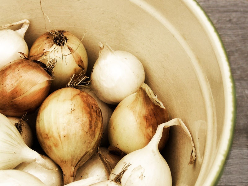 Kitchen Wall Art Bowl Of Onions -Food Print Sepia Brown - galleryzooart