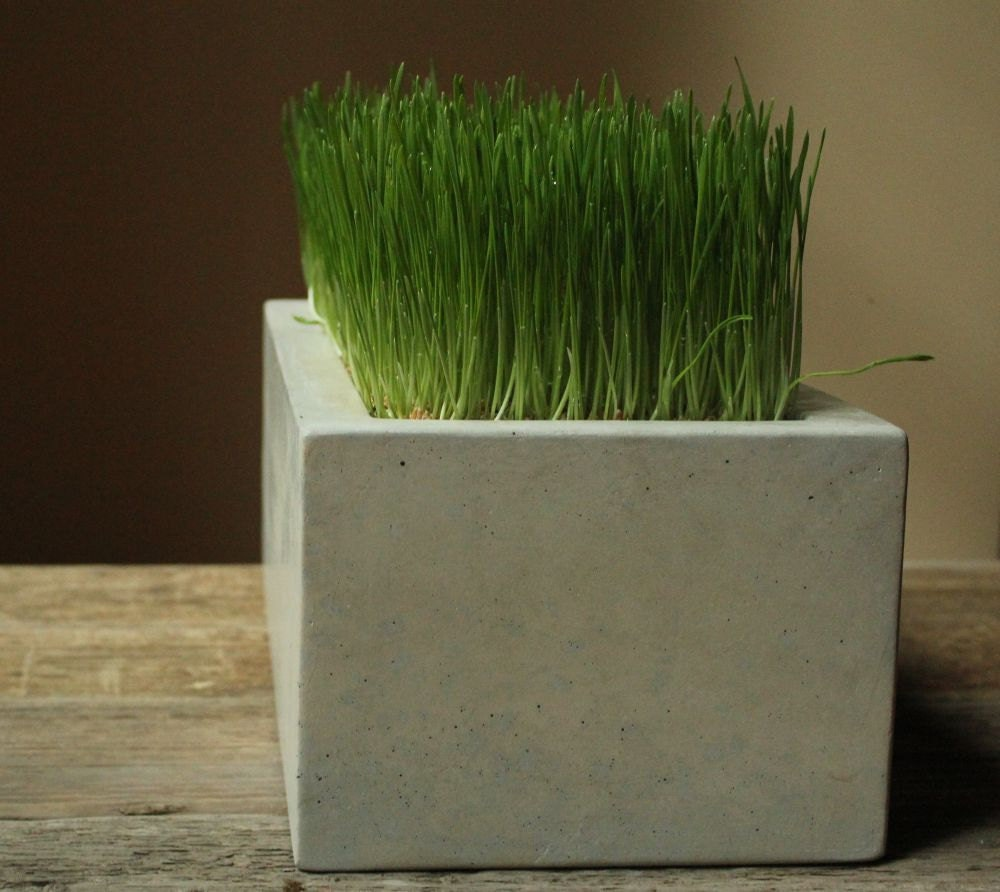 Concrete Box Planter - roughfusion