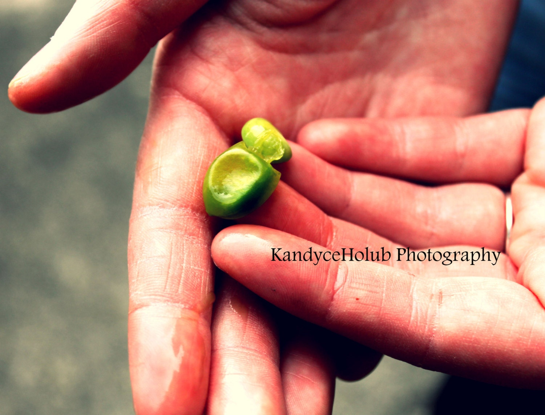 New Life - ThePhotoKorner