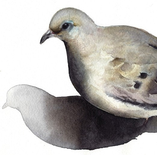 Mourning Dove- bird watercolor-Archival print -watercolor painting print - amberalexander