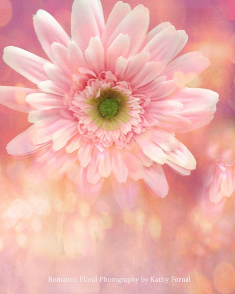 "Nature Photography, Gerber Daisy, Dreamy Cottage Chic Daisy, Shabby Chic Pink Flowers, Fine Art Floral Photos 8"" x 10"" - KathyFornal"
