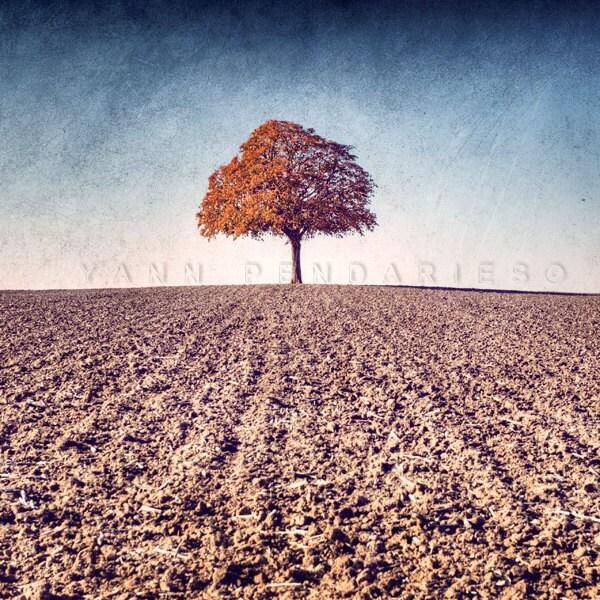 Landscape photography, Rustic decor, Autumn leaf, Indian summer, Tree photography, Autumn Photography, Farmhouse decor, Print 6x6 (15x15cm) - PhotographyDream