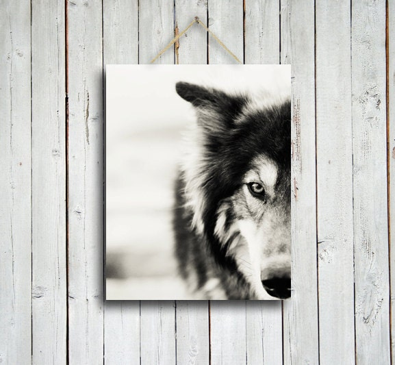 The Wolf - Wolf photo - Wolf decor - Native American style decor - Black and White wolf - Wolf dog photo - Wolf photography - EmeraldTownRaven