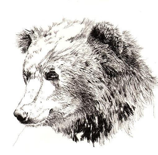 Bear print - 11x14