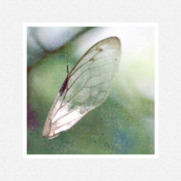 Woodland Decor Photography, mint green, wing, insect, Hanging By A thread, nature fine art print 8x8 - moonlightphotography