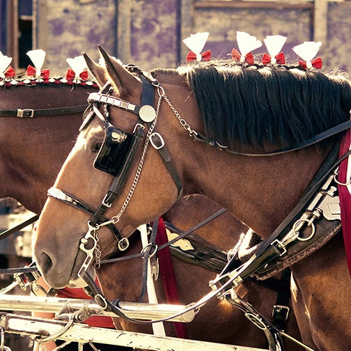 horse photography - All the King's Horses - 8x8 - Christmas gift idea home decor country farm photo fall fair