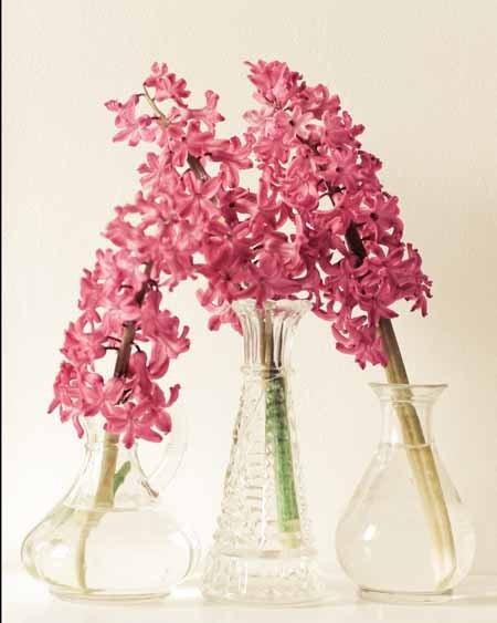 Восторге.  Весной гиацинт цветок белой стеклянной вазе потертый шик коттедж романтический девчушки довольно цветочный.  8x10 изобразительного искусства фотографии