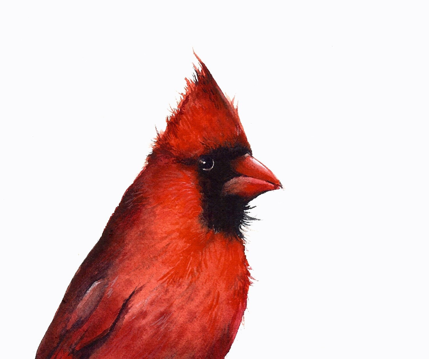 Cardinal print of watercolor painting- bird watercolor,cardinal painting, bird art, nature - amberalexander