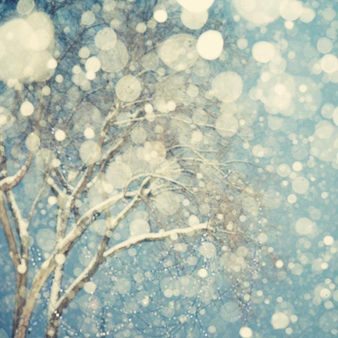 Winter Photography, Tree, Snowflakes, Snow, Blue, White, Abstract Photograph - Snowblind