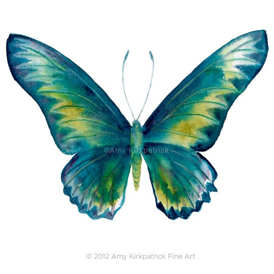 No.42 Blue Rajah Butterfly, 8x10 Signed Fine Art Print of Amy Kirkpatrick watercolor