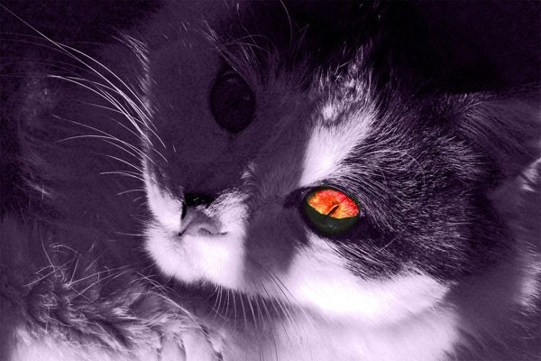 Halloween Scary Cat Greeting Card No. 6 - Felix the Fiendish Feline - JackQLantern