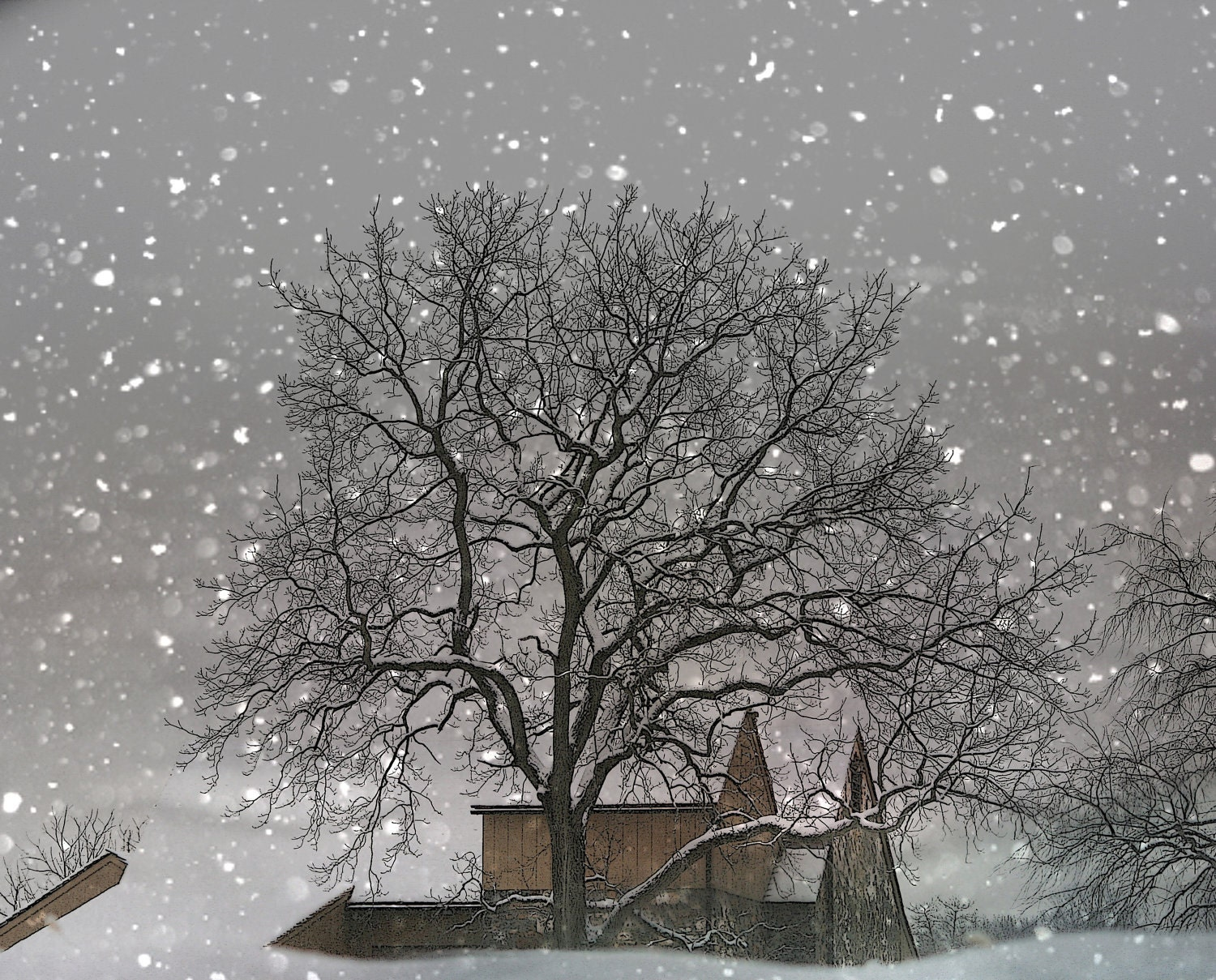 Desigrans Ideas: Winter Photography white tree barn snow ... Pictures Trees In Winter Pinterest