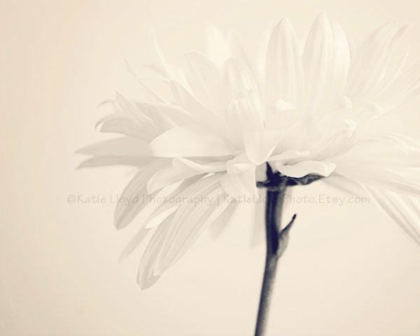 Beautiful Me - 16x20 Fine Art Flower Photography Print - Feminine Bright Soft Floral Home Decor Photo