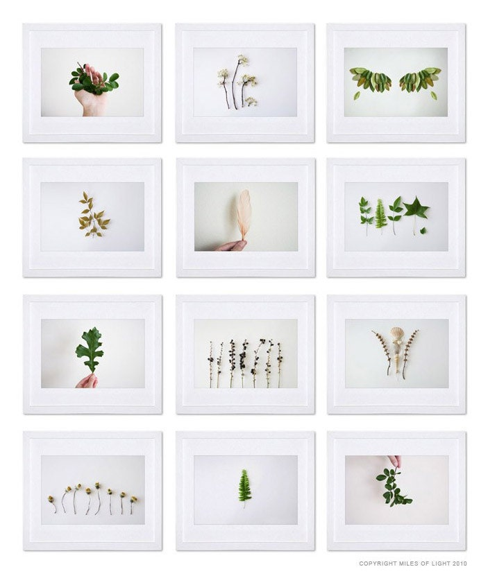 Wing N1 - 8x10. Fine Art Photographic Natural History Print. Minimal simple style. Natural Home Decor. Indoor garden botanical