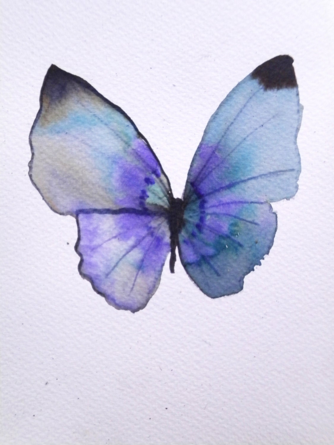 light blue and purple butterfly