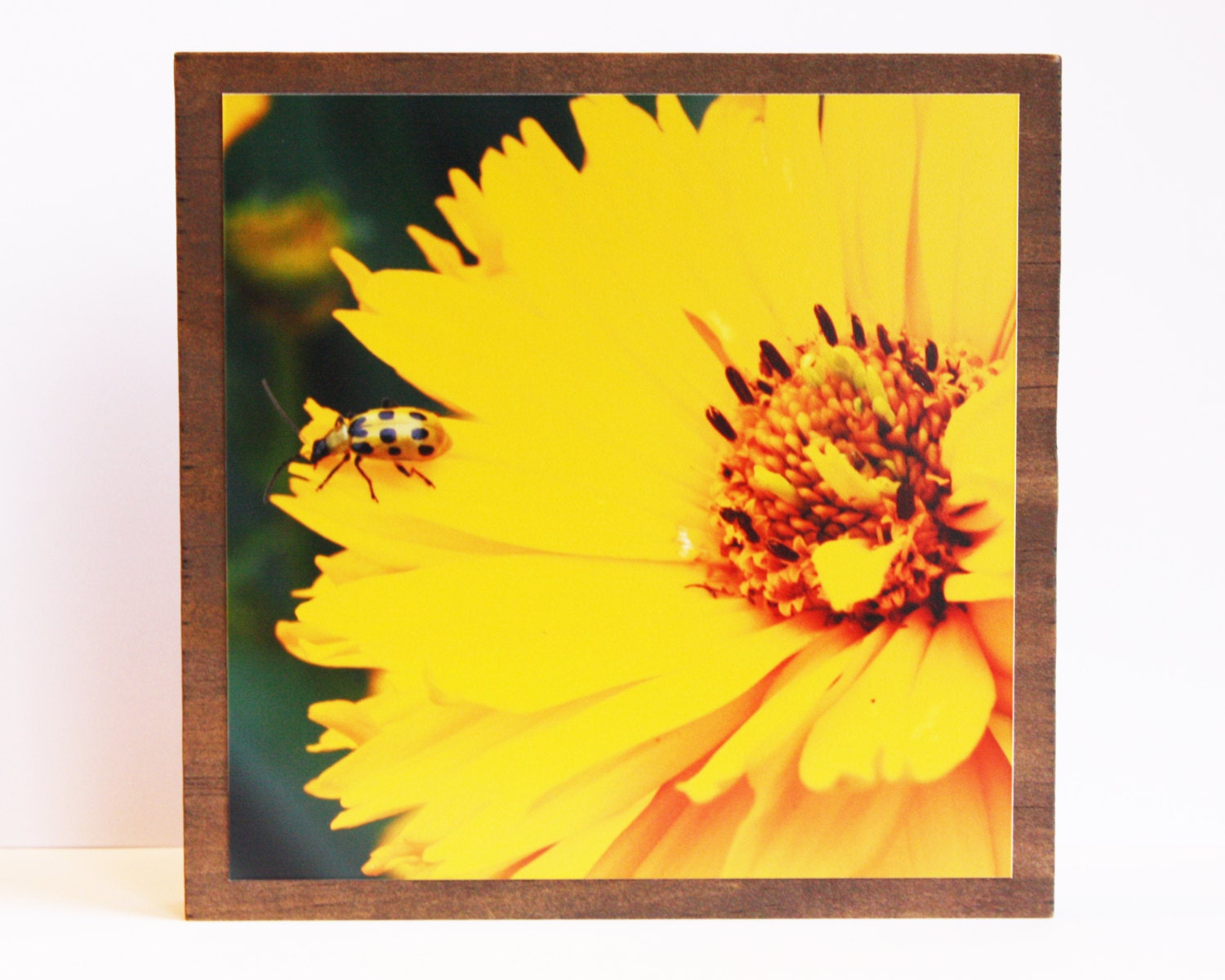 Yellow Photo Block - Nature Photography - 5X5 - DebbyDabbles