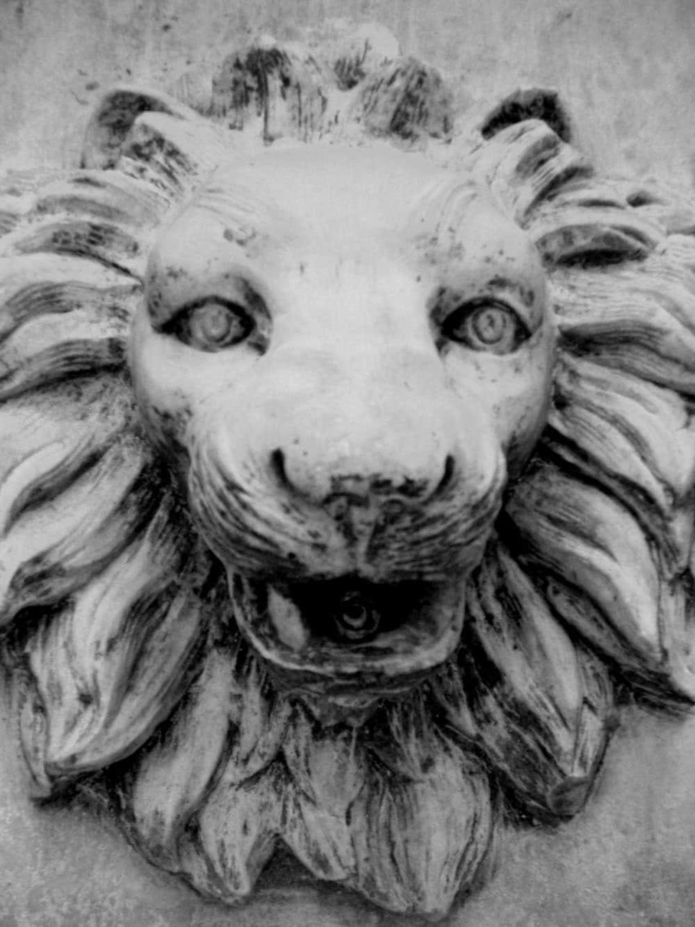 Lion head - bethberg