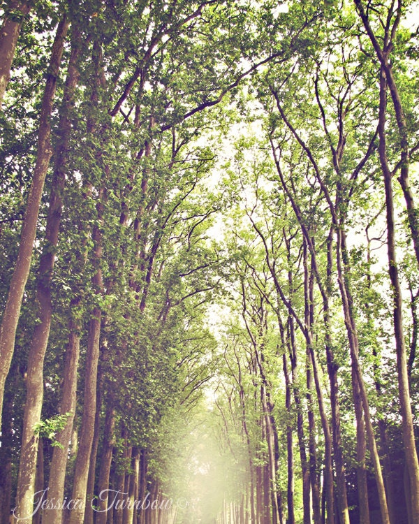 Dreamy Forest Landscape - 8x10 Photo Print of Versailles, France - Trees, Light, Sunshine, Green and Yellow, Brown - Path, Fairytale, Tall - gypsyfables