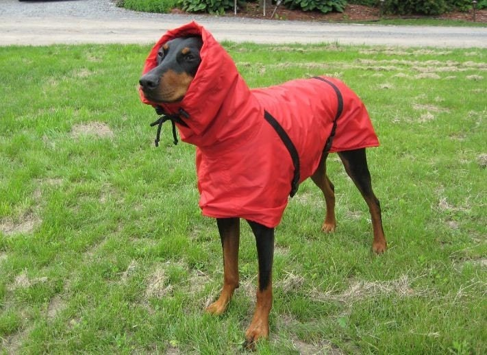 Big Dog Rain/Winter Jacket
