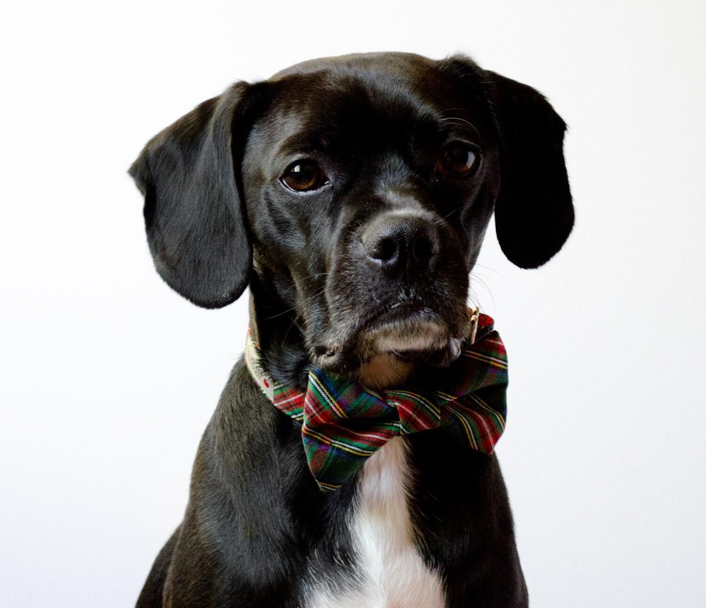 Hunter Green Holiday Tartan Dog Bowtie Collar
