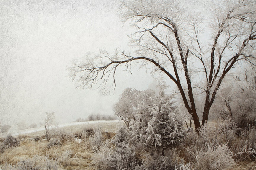 Fine Art Photography Woodland Art Trees and Hoarfrost - lucysnowephotography