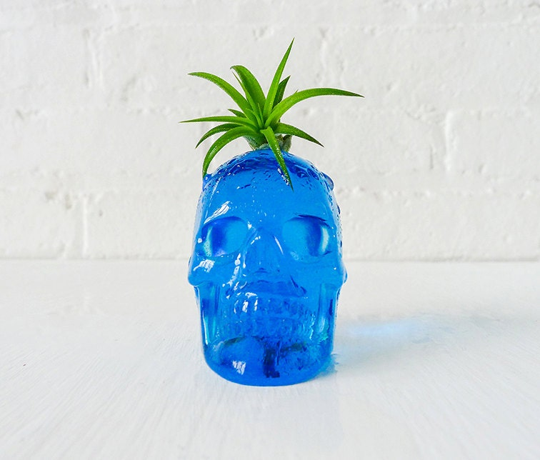 Air Plant Crystal Skull Garden - Carved Blue Obsidian with Live Mohawk - EarthSeaWarrior
