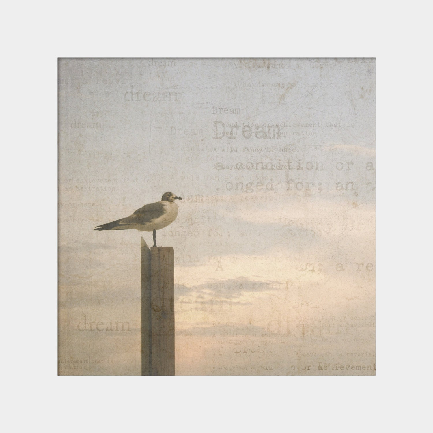 Dreaming Seagull: square fine art nature photograph print with bird and sky in soft pink, blue, and gray - UninventedColors