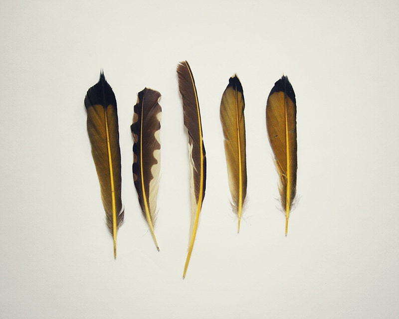 Golden Feathers - Fine Art 8x10 Photograph - Bird Photography - Still Life Yellow Flicker Feathers Set of 5 - sophiebrownehandmade