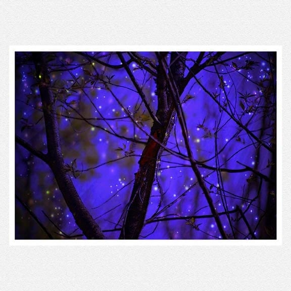 Night Star Photography, dark blue wall decor, tree branches, stars When the World Was as it Should Be print 8x12 - moonlightphotography