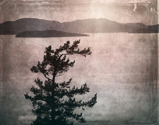 Coastal Washington - 8 X 6 fine-art textured photograph of a lone coastal tree and mountain landscape in the pacific northwest - StoriedEye