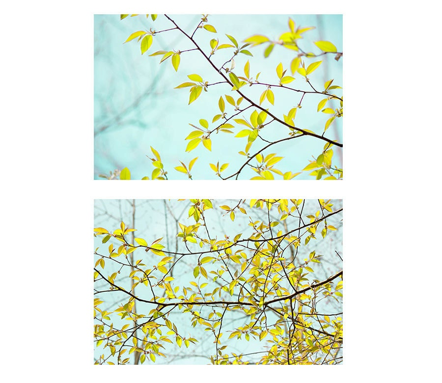 Two Sky Landscape Photographs, Yellow  Foliage on Turquoise, Modern Abstract Wall Decor