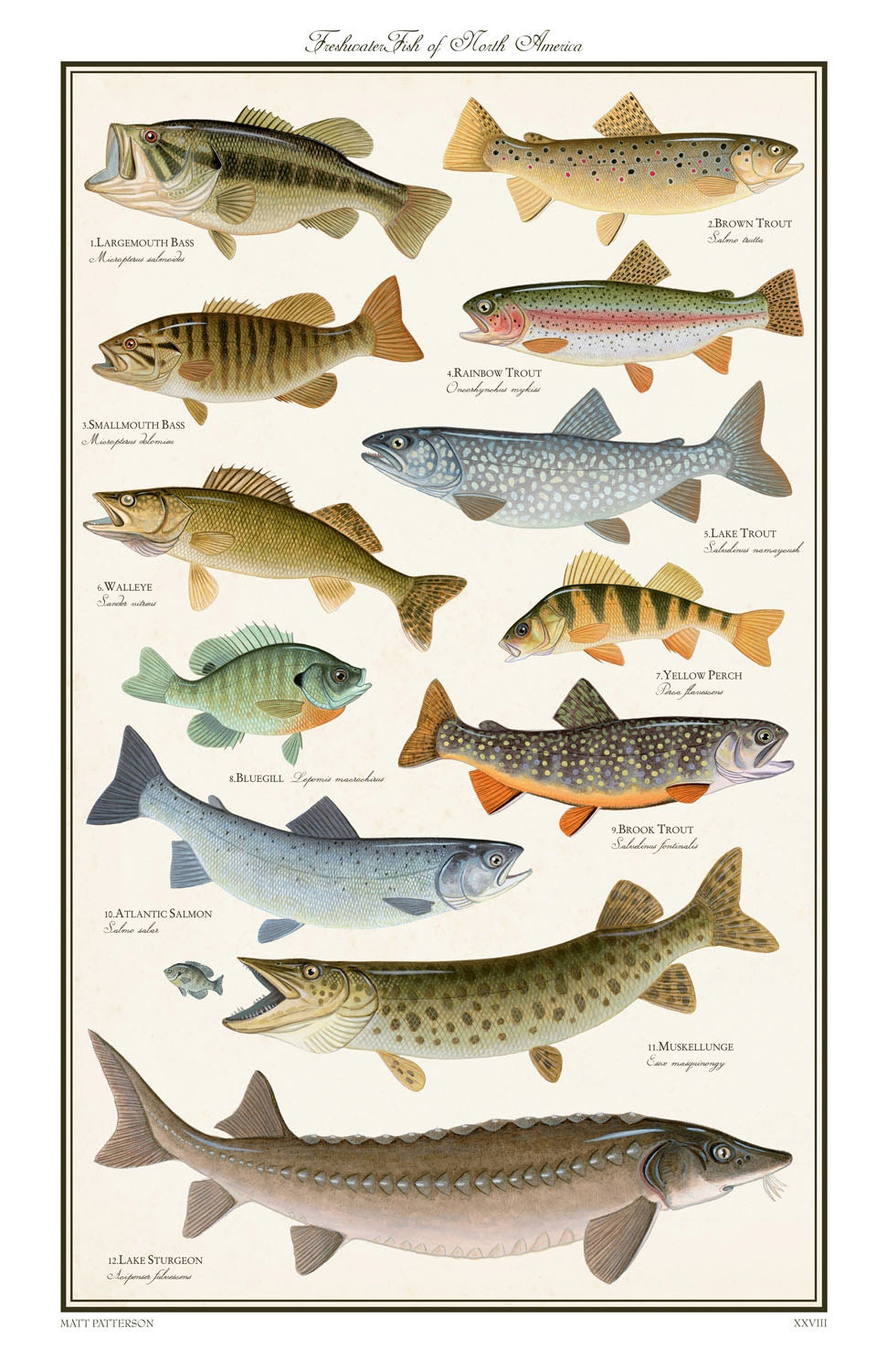 Freshwater fish poster freshwater fish of the northeast for Alabama freshwater fish