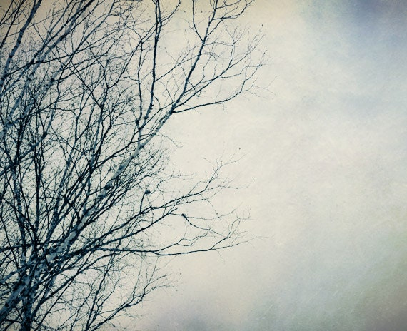 Winter photography, winter sky, bare tree branches, winter decor, blue and white, pastel photograph - NancyFalsoPhotos