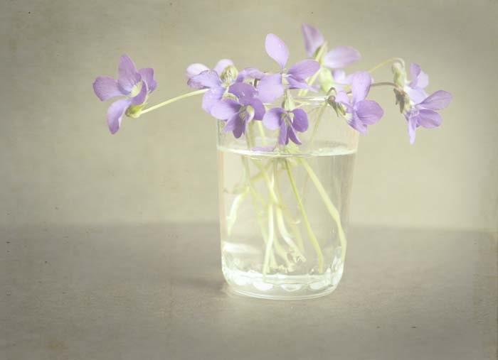 ла violette3 - фиолетовый фиолетовый цвет серый исчез мечтательный романтический старинный настроение доступным искусством Boho шикарный потертый шик 5x7 художественной фотографией