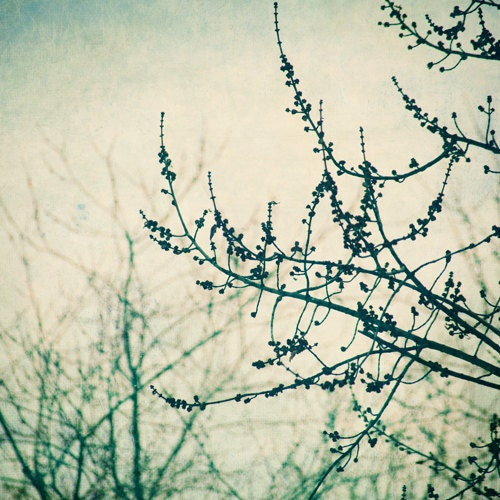 nature photography-  trees teal beige green surreal-Hush fine art photograph 8x8 print - sandraarduiniphoto