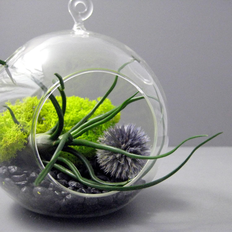 Bulbosa and Echinops Terrarium - seaandasters
