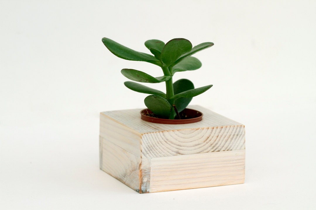 Succulent planter, white wedding decoration wooden plant pot eco friendly reclaimed geometric shape - ArtGlamourSligo