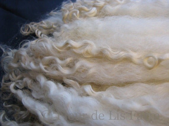 LONG Cotswold Ewe  Lamb  Sheep Locks - Washed and Flicked - Ready to Spin, Doll Hair, Embellish.
