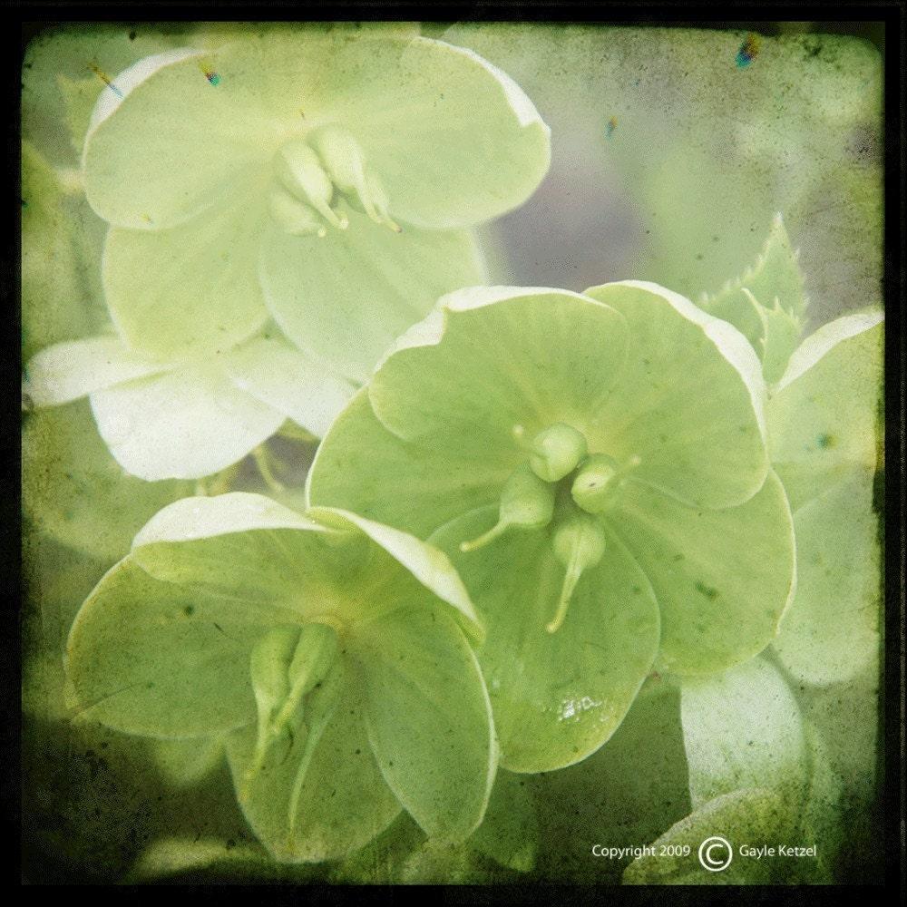 Chartreuse Floral Photograph--Chartreuse--TTV 5x5 Fine Art - Ketzelphotography