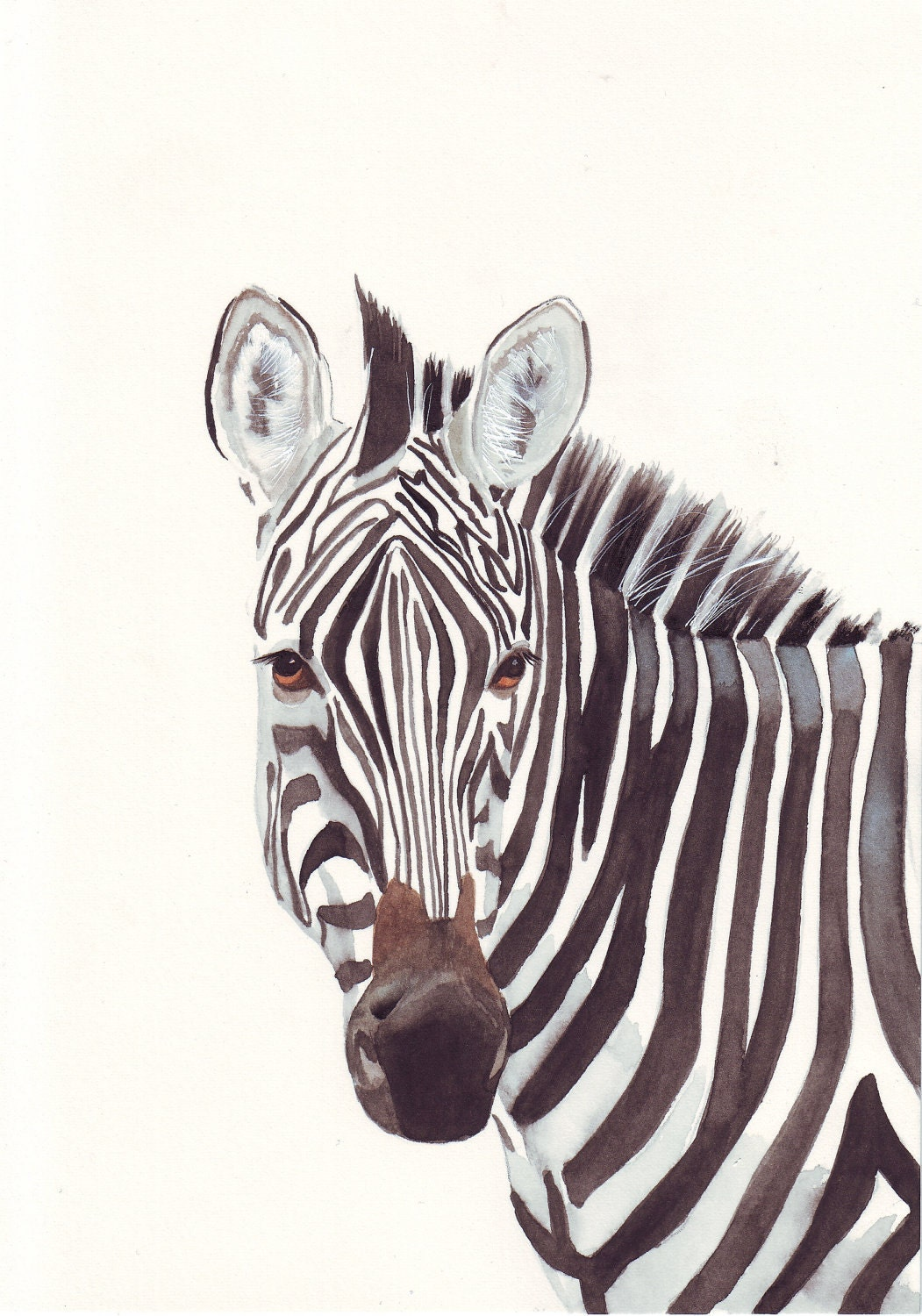 Zebra ART No. 065 Zoo animal art  Large Print of watercolor painting
